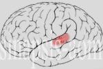 Las personas sordas procesan el tacto y la visión de forma diferente. (sinapsis-aom.com.es)