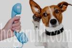 Perros de señal para personas sordas. (hogarutil.com)